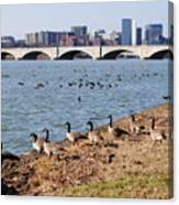 Ducks Of The Potomac Canvas Print