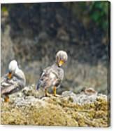 Ducks On A Rock Canvas Print