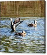 Ducks On Colorful Pond Canvas Print