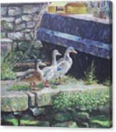 Ducks On Dockside Canvas Print
