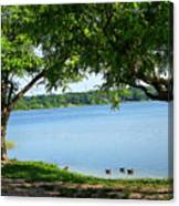 Ducks On Lake Edge Canvas Print