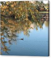 Ducks On Peaceful Autumn Pond Canvas Print