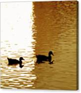 Ducks On Pond 2 Canvas Print