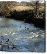 Ducks On The River In Early Spring Canvas Print