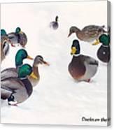 Ducks On The Snow Canvas Print