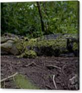 Duckweed Camouflage Canvas Print