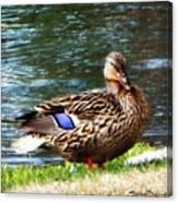 Ducky Day  Canvas Print