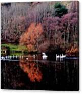Duddingston Swan 17 Canvas Print