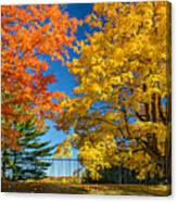 Dueling Maples Canvas Print