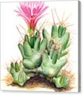 Dumpling Cactus Canvas Print