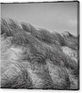 Dune Grass, Florence Canvas Print
