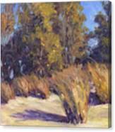 Dune Grasses Canvas Print