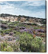 Dune Plants As Erica And Beautiful Sky Canvas Print