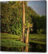 Dunlawton Pond Canvas Print