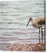 Dunlin And The Green Sea Canvas Print