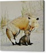 Dunr Fox Father And Child Canvas Print