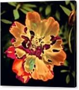 Durango Outback Mix 02 - Photopower 3200 Canvas Print