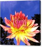 Dusk And A Dahlia Canvas Print
