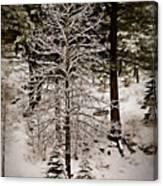 Dusk In The Sierras Canvas Print