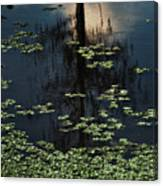 Dusk In The Swamp Canvas Print