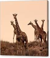 Dusty Giraffes Canvas Print