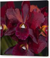 Dusty Red Orchid Canvas Print