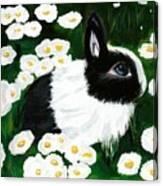 Dutch Bunny with Daisies Canvas Print