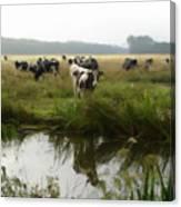 Dutch Cows Canvas Print