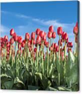 Dutch Tulips Second Shoot Of 2015 Part 10 Canvas Print