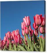 Dutch Tulips Second Shoot Of 2015 Part 8 Canvas Print