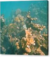 Dying Coral Canvas Print