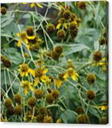 Dying Sun Flowers Canvas Print