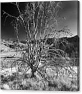 Dying Tree Canvas Print