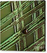 E. Coli In Culture Dish, Macro Image Canvas Print