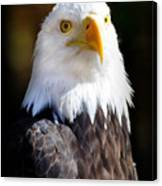 Eagle 14 Canvas Print