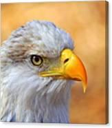Eagle 7 Canvas Print