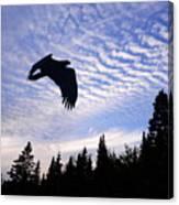 Eagle At Dawn Canvas Print