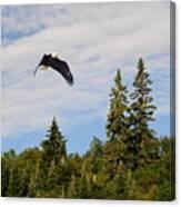 Eagle At Scott Brook Canvas Print