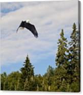 Eagle At Scott Brook II Canvas Print