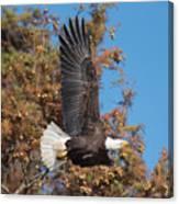 Eagle Banking Canvas Print