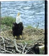 Eagle Calls In Its Mate Canvas Print