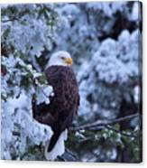 Eagle In A Frosted Tree Canvas Print