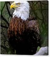 Eagle In The Night Canvas Print