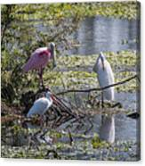 Eagle Lakes Park - Roseate Spoonbill And Friends, Socializing Canvas Print