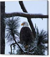 Eagle On A Frosted Limb Canvas Print