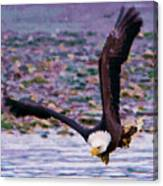 Eagle On A Mission Canvas Print