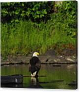 Eagle On River Rock II Canvas Print
