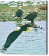 Eagle Over The River Canvas Print