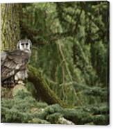 Eagle Owl In Forest Canvas Print