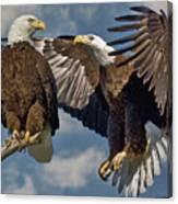 Eagle Pair 3 Canvas Print